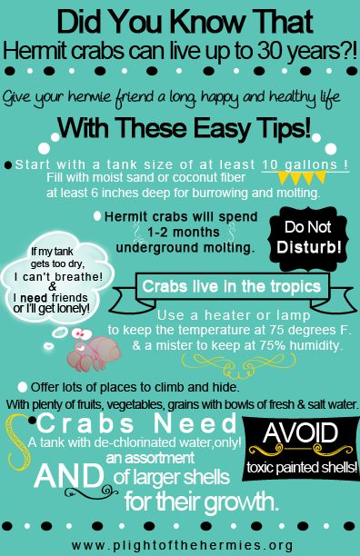 Click here to open up our cheat sheet for all the basics on hermit crab care. Print a few and hand it out to spread the word! Hermit crab care guide.