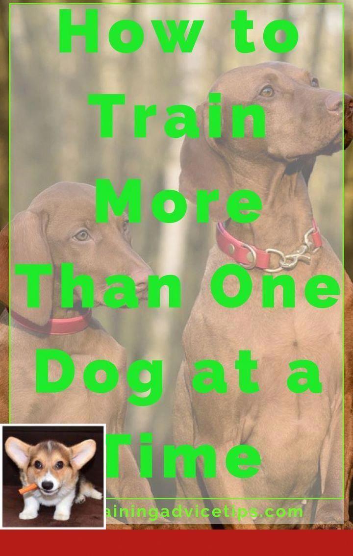 Cutestdogever Dogsrule Dogchild Bostonterrierpuppy Aww Ilovemydog Dogsofinstagram Dailyfluff Dog Training Positive Dog Training Training Your Dog