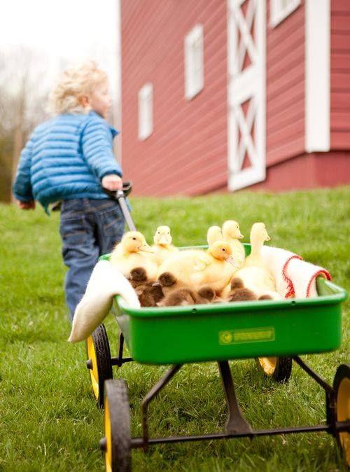 Chicken Truck - Wikipedia