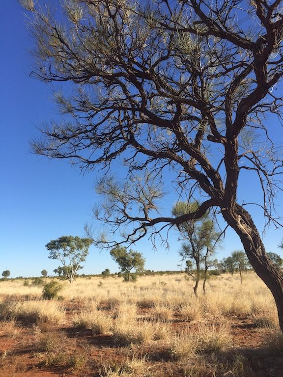The trees of Central Australia are so full of character #CentralAustralia