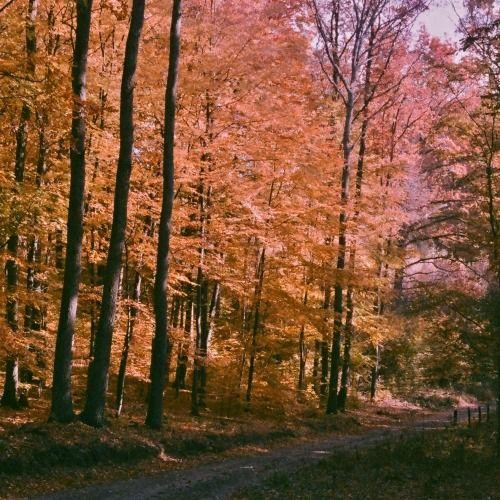 http://www.aparaty.tradycyjne.net/foto,81609.html