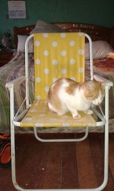 #Pelusa se nota que te gusta el #verano en tu silla #playera #instakat #instacat #cat #gato