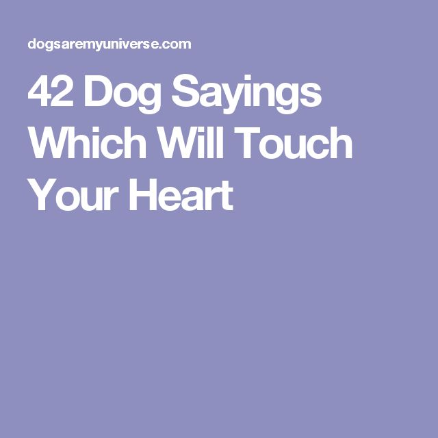 42 Dog Sayings Which Will Touch Your Heart