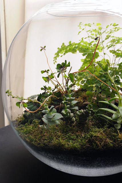 indoor gardening at its finest.  fishbowl terrarium. love to make this, especially since I can't have fish at my place.