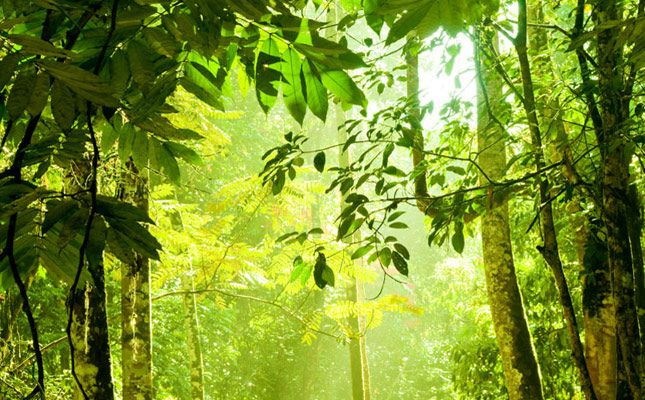 Dense tropical forest on the island of Borneo
