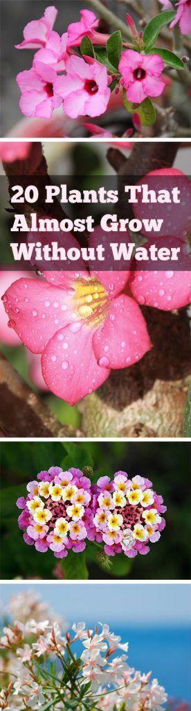 Plants, Drought Resistant Plants, Plants That Need Little Water, Drought Friendly Plants, Popular, Plants, Plant Gardening