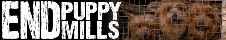American puppy mills produce millions of puppies every year while millions of dogs that are put to death in shelters every year. When the breeding dogs' bodies can no longer maintain a high level of productivity, they are destroyed. Puppy millers are no longer profiting from these animals, so they dispose of them in the cheapest way possible. They do it themselves, often on their property, by starving, drowning, shooting, beating, or burying the dogs alive.