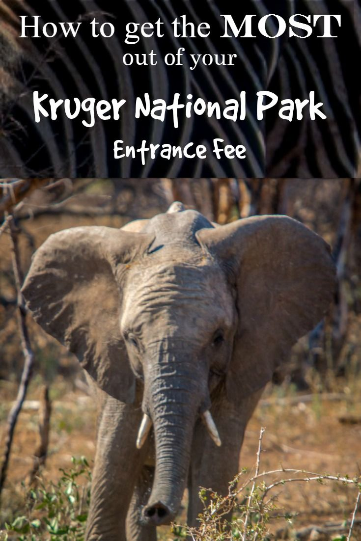 How to get the Most out of your Kruger National Park Entrance Fee with helpful tips. Click to read more.... Kruger National Park safari | Kruger national park south africa tips - @greenglobaltrvl