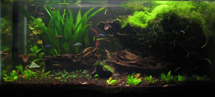 In non-CO2 aquariums, Riccia do better if they are placed on/near the surface with maximum exposure to lighting.