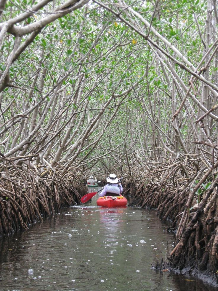 Weedon Island Preserve - St. Petersburg - Reviews of Weedon Island Preserve - TripAdvisor