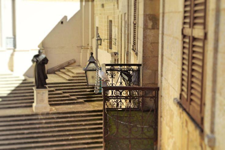 #Citadel #Victoria #Gozo #Malta #pigeon