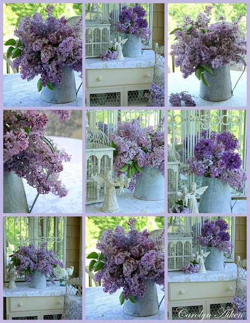 Adoro i fiori di Lillà