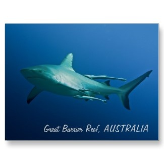A cool postcard featuring a reef shark on Australia's Great Barrier Reef