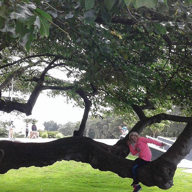 #invercargillskatepark #sundayfunday #invercargill  #treemagic