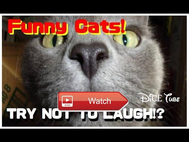 😸 Funny Cat videos Best Cat Videos Ever 😹 Cats are so funny you will die laughing Funny cat compilation Funny Cats Compilation Most See 😼…