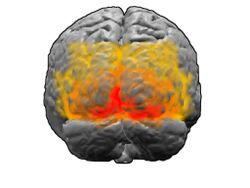 Visual Cortex - Wikipedia