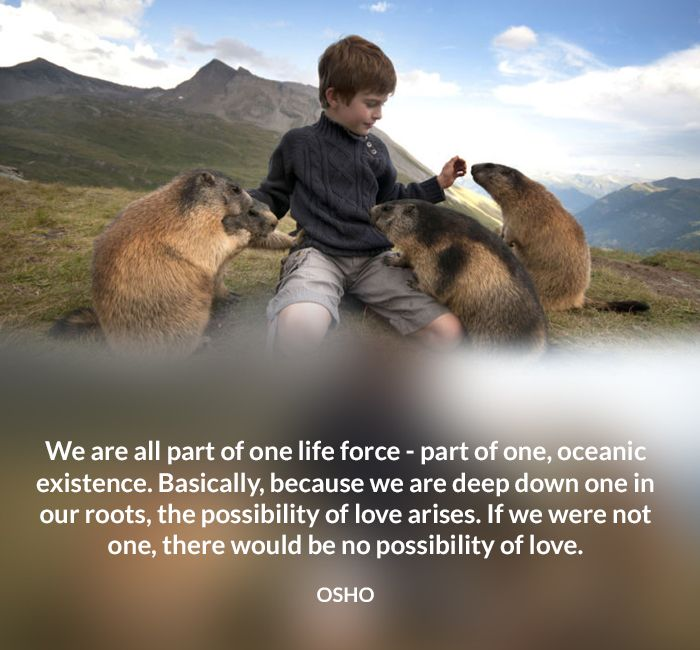 476 Best OSHO Quotes Images On Pinterest