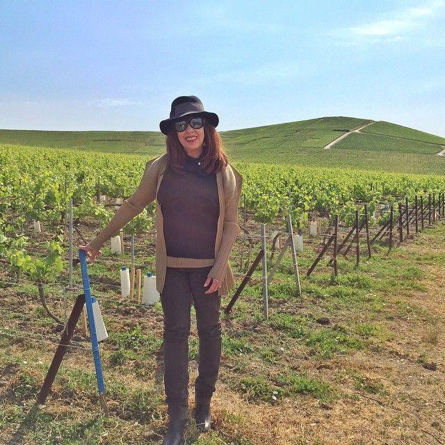.@tfsalomon au milieu des vignes #champagne #Roederer #Cristal #GirlPower3 #vignoble #ay #gouttedor #france #vineyard #vine #gastronomy