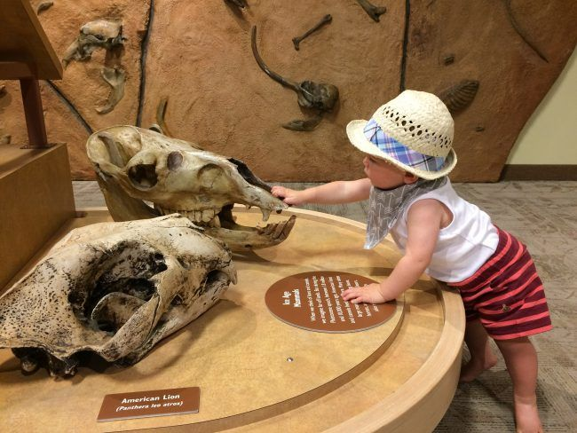 World's cutest baby pets an animal skull at a natural history museum
