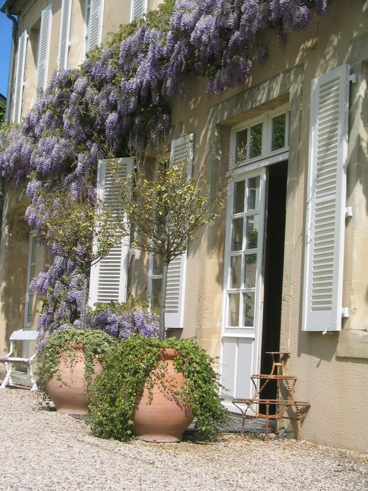 The wisteria by la commanderie in Chateau la Cheneviere