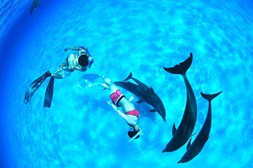 Dolphin cruise in Bahama