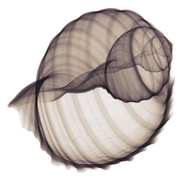 Reviling inner world of Seashells and marine wonders | Modern ...