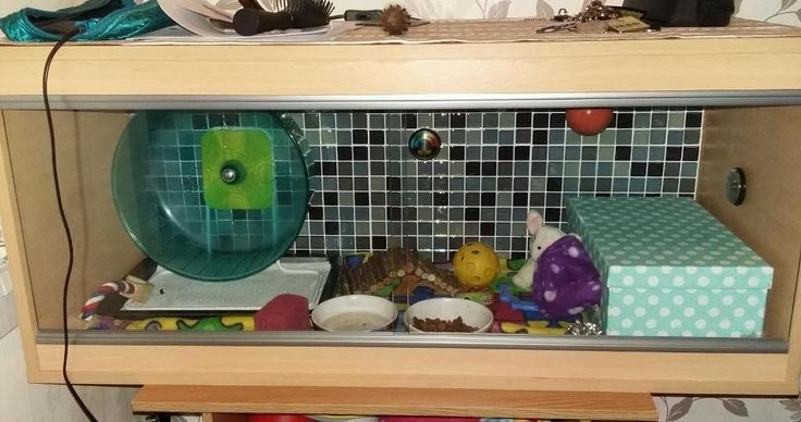 Baby African pygmy hedgehog and setup - Pets for Sale | Pets for Sale