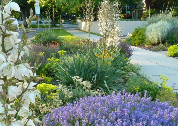 8 easy care plants for parking strip gardens gardens for Easy to care for landscaping ideas
