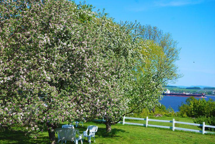 Détente sous les pommetiers en fleurs, en regardant les bateaux. Pour nos hôtes tigidou