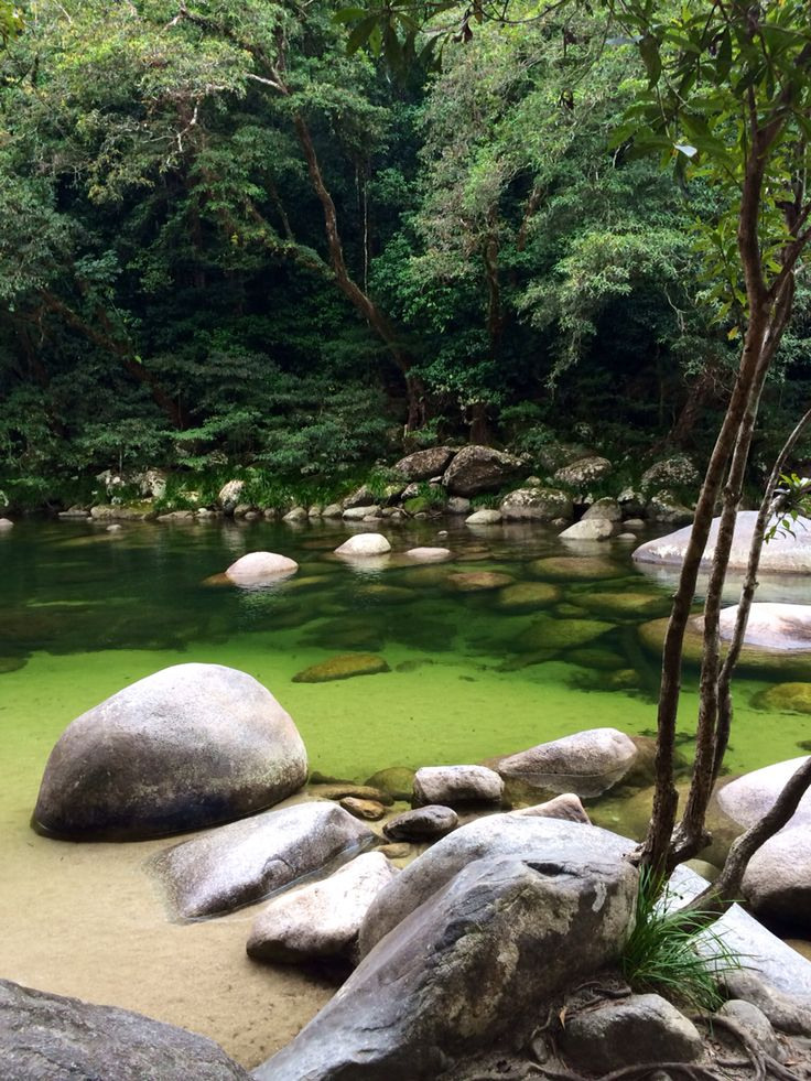 Daintree Rainforest : Mossman Gorge : Australia