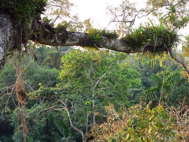 piante epifite -che crescono su altre- Cerca con Google