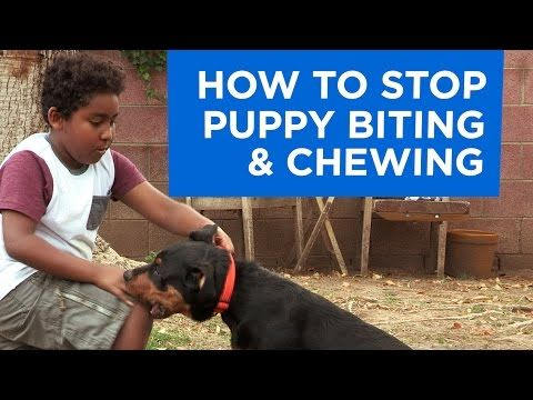 how to stop your puppy from chewing on you