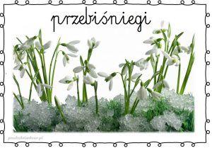 http://przedszkolankowo.pl/2017/01/21/wiosenne-kwiaty-plansze-zestaw-1/ WIOSENNE KWIATY – plansze zestaw 1 – Przedszkolankowo
