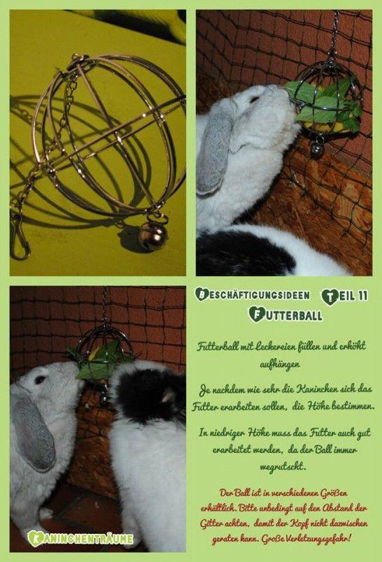 besch ftigung spielzeug zwergkaninchen pinterest spielzeug kaninchen und hase. Black Bedroom Furniture Sets. Home Design Ideas