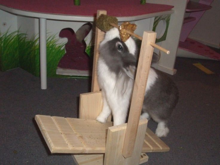 I gotta make this for my bunny
