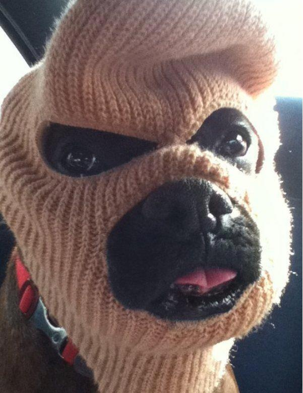 Have You Seen This Man? Orange County police departments are investigating similar daytime burglaries. #funny #dog