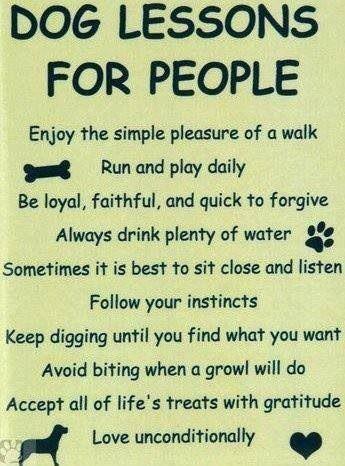 Doggie health tips!