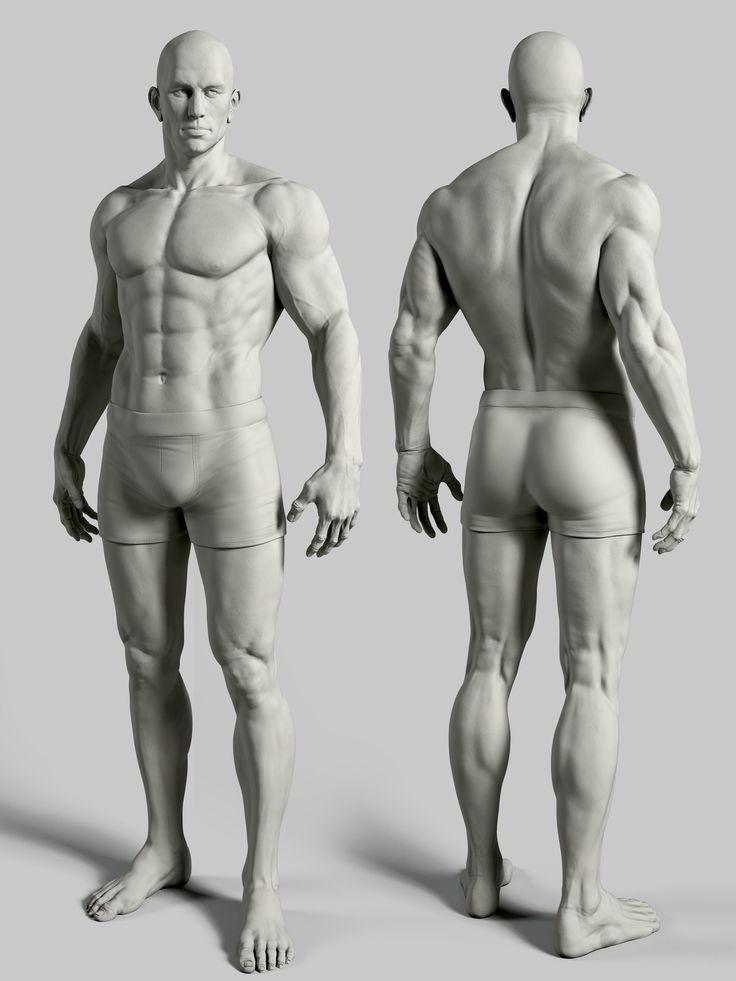 form of the male figure arm arms leg legs torso pelvis anterior posterior dorsal front back rear