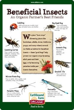 Beneficial Insects |Easy Homesteading