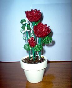 rózsa cserépben