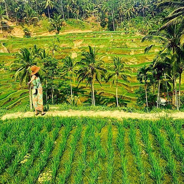 Stay close to anything that makes you glad to be alive #realbali ~ John Green .   Pic via @hotel_suite_travels -   Follow and Tag Us to Get Featured -  The vibrant greens of the Tegallalang rice terraces gets my vote