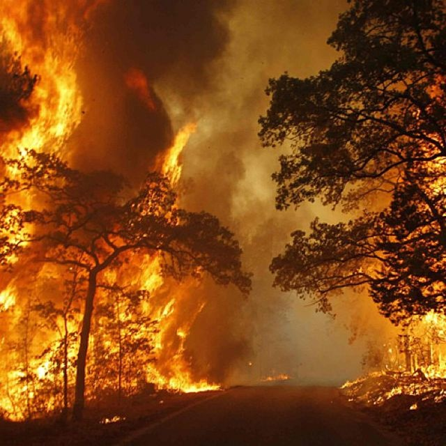 """A wildfire burns out of control beside a road near Bastrop State Park, Texas, Sept. 5, 2011. Instagram photo by Mike Stone, Reuters"