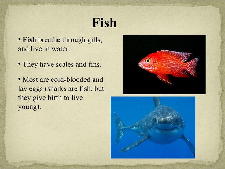 biology of the invertebrates pdf