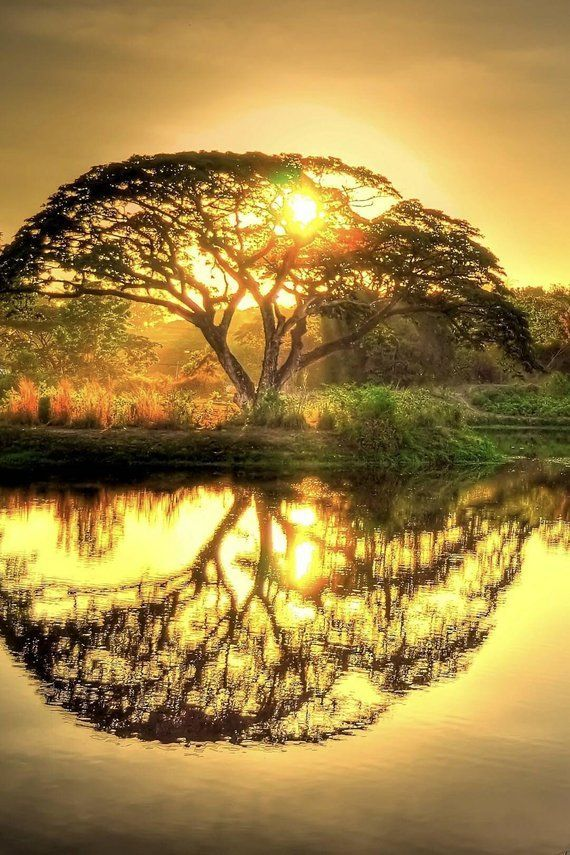 5d diy diamond painting sunset pond tree mosaic cross stitch full square …   – Kochen