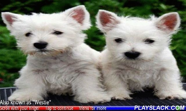 Puppies And Dogs 1 FREE  Android App - playslack.com , American Bulldog, Border Collie, Chihuahua, Dalmatian, Lhasa Apso, Newfoundland, Rottweiler, Scottish Terrier and many more! This educational game uses 148 photos of adorable puppies and the adult dogs they become, to teach you to recognize 74 breeds of dog. Enjoy the photos, identify the correct puppy or dog and listen to the spoken facts. Read lots of interesting information such as weight, temperament, why the breed was developed, and…