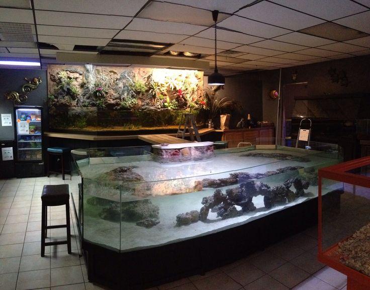 356 best images about aquarium on pinterest for Stingray fish tank