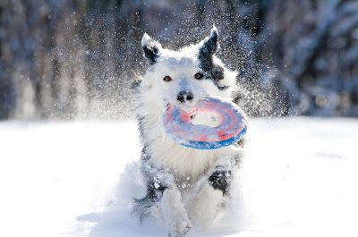 5 quick tips to keep your dog warm during the cold winter months. Whether backpacking, hiking or car camping, keep your best friend comfortable in the cold