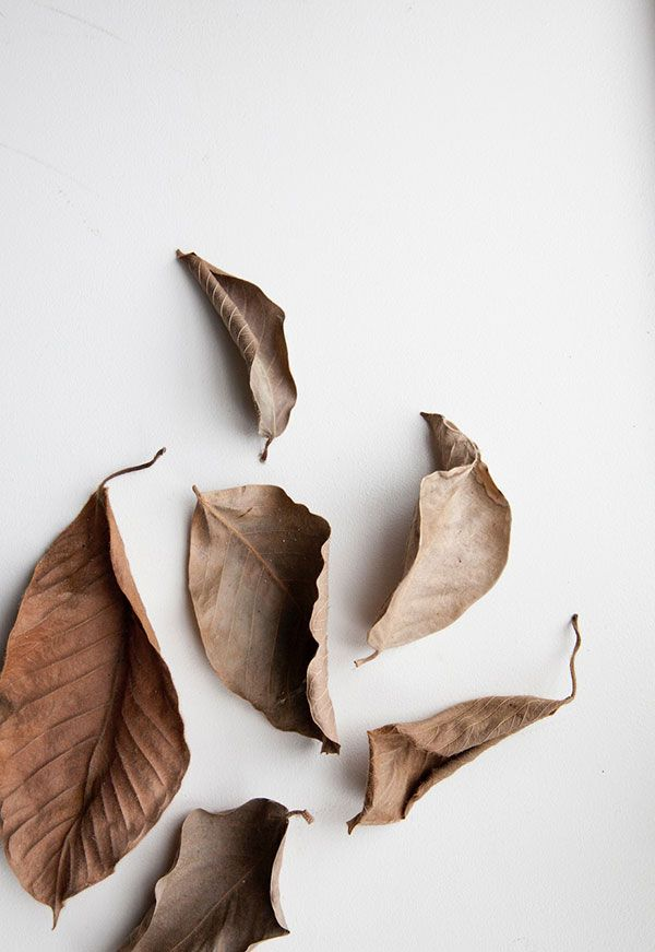 Dry leaves beige hue // minimal Instagram blog photography inspiration idea
