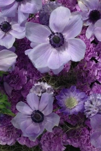 Purple flowers types pictures prettyflowers flowergarden purple flowers types pictures prettyflowers flowergarden mightylinksfo