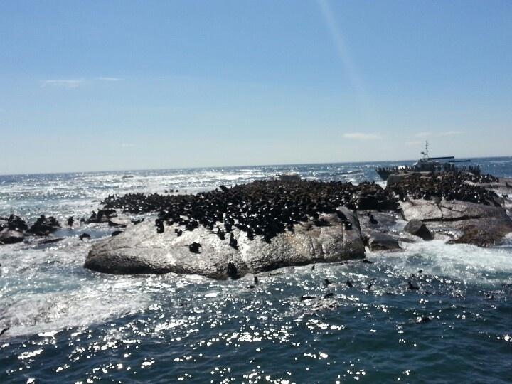 Hout Bay (ilha das focas) Cape Town